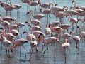 flamingos-walvis-bay