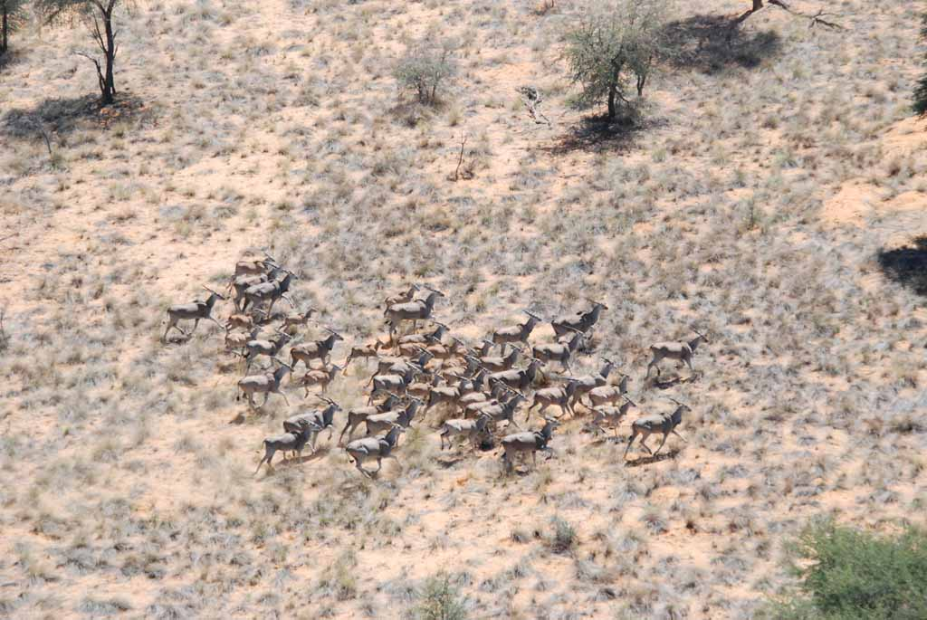 donnersberg-wild-elands